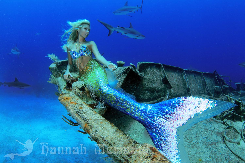 Shipwreck with Sharks - Hannah Mermaid